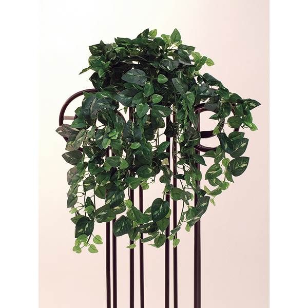 EUROPALMS 50cm Kultaköynnös, vihreä/keltainen. Pothos tendril, green-yellow. Bushy leafage appears realistic