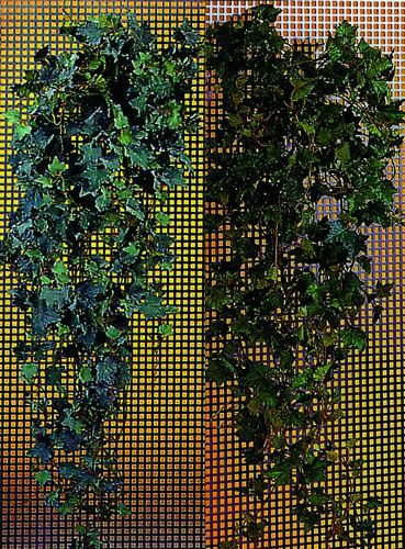 DECO 150cm Special Ivy Tendril with dew , discoland.fi