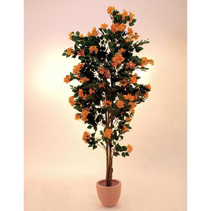 EUROPALMS 210cm Ihmeköynnös, oranssinkeltainen. Kevään ja kesän kosketus, nautittavaa väriloistoa.