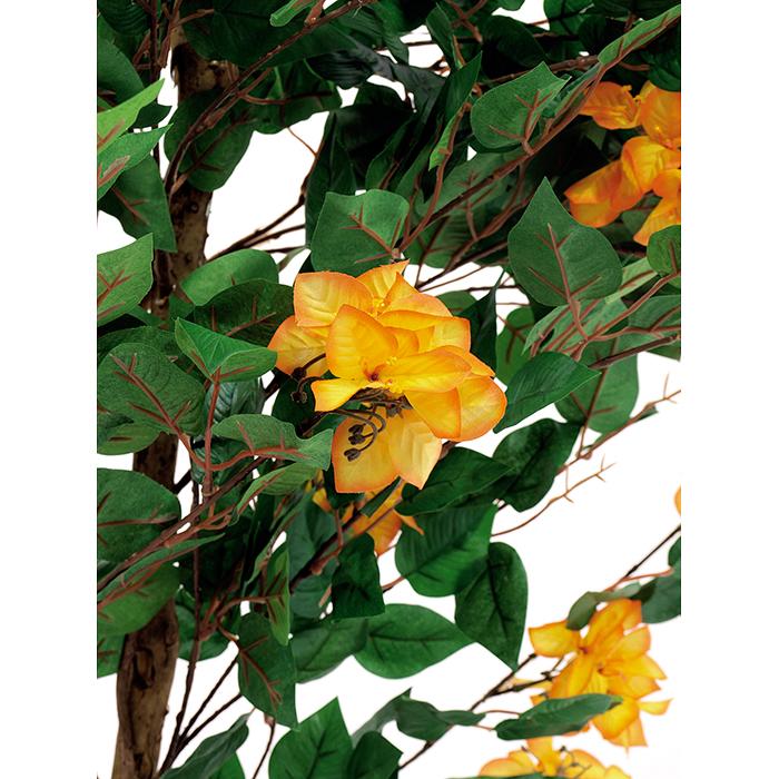 EUROPALMS 240cm Ihmeköynnös, oranssinkeltainen. Suurempi versio kevään ja kesän kosketuksesta, nautinnollista väriloistoa. POISTO