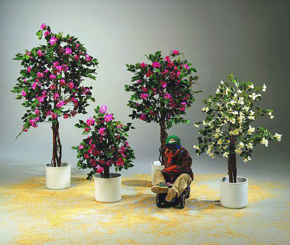 EUROPALMS 240cm Ihmeköynnös, punainen. Bougainvillea - for a red touch of color in spring and summer