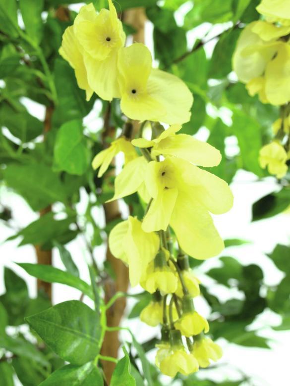 EUROPALMS 240cm Japaninsinisade, suurempi versio, keltainen. Runsas kukkainen puu kevät- ja kesätunnelmaan. Erittäin näyttävä.