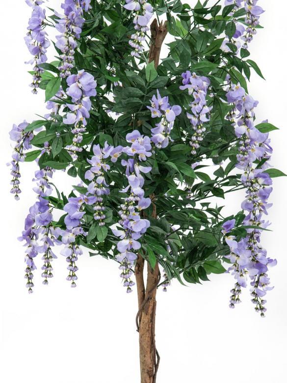 EUROPALMS 210cm Japaninsinisade, purppura. Runsas kukkainen puu kevät- ja kesätunnelmaan. Erittäin näyttävä.