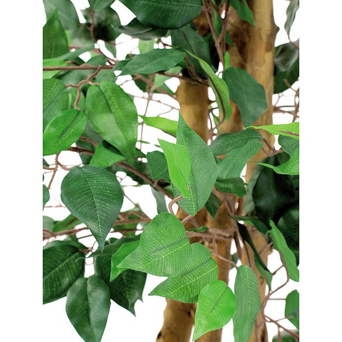 EUROPALMS 210cm Limoviikuna, käsin tehdyt lehdet ja aito runko. Koko viikunasarjan kaikki koot ovat erittäin edullisia!