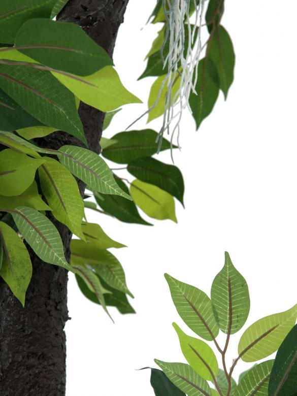 EUROPALMS 150cm Metsäviikuna, lehdissä vaaleampi lehtisuonitus ja keinotekoinen runko. Limoviikuna on viikunoiden sukuun kuuluva laji, joka kasvaa luonnonvaraisena Etelä- ja Kaakkois-Aasiassa sekä Pohjois-Australiassa. Limoviikuna on myös suosittu koristekasvi, josta on jalostettu runsaasti erilaisia lajikkeita. Limoviikunaa on kasvatettu huonekasvina jo lähes parisataa vuotta. Se on lähtöisin Intiasta. Limoviikuna muistuttaa hieman kotoista koivuamme tuuheine ja siroine lehtineen. Limoviikuna voi kasvaa luonnonvaraisena jopa 30 metriä korkeaksi puuksi. Lehdet ovat 6–13 cm pitkiä, soikeita ja pitkäkärkisiä sekä kiiltäviä. Lajikkeet eroavat toisistaan lehtien koon, värin sekä värityksen kirjavuuden suhteen. Koko viikunasarjan kaikki koot ovat erittäin edullisia.