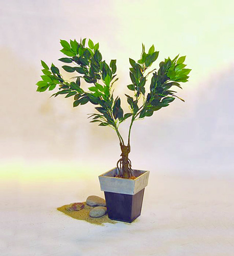 EUROPALMS 90cm Ficus tree with sprays , discoland.fi
