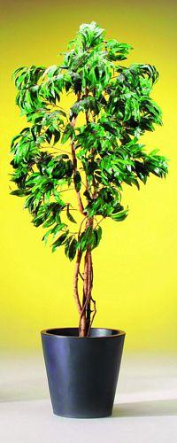DECO 210cm Mango tree, Mango Puu, discoland.fi