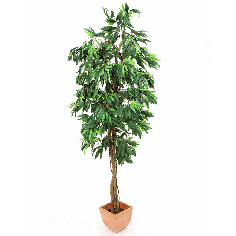 EUROPALMS 240cm Mangopuu. Mango tree. Su, discoland.fi