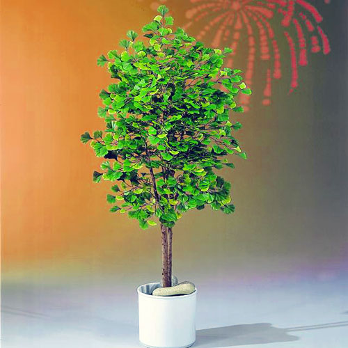 DECO 120cm Ginkgo tree with natural trun, discoland.fi