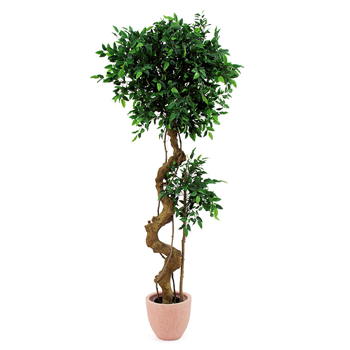 EUROPALMS 170cm Limoviikuna bonsai-rungo, discoland.fi
