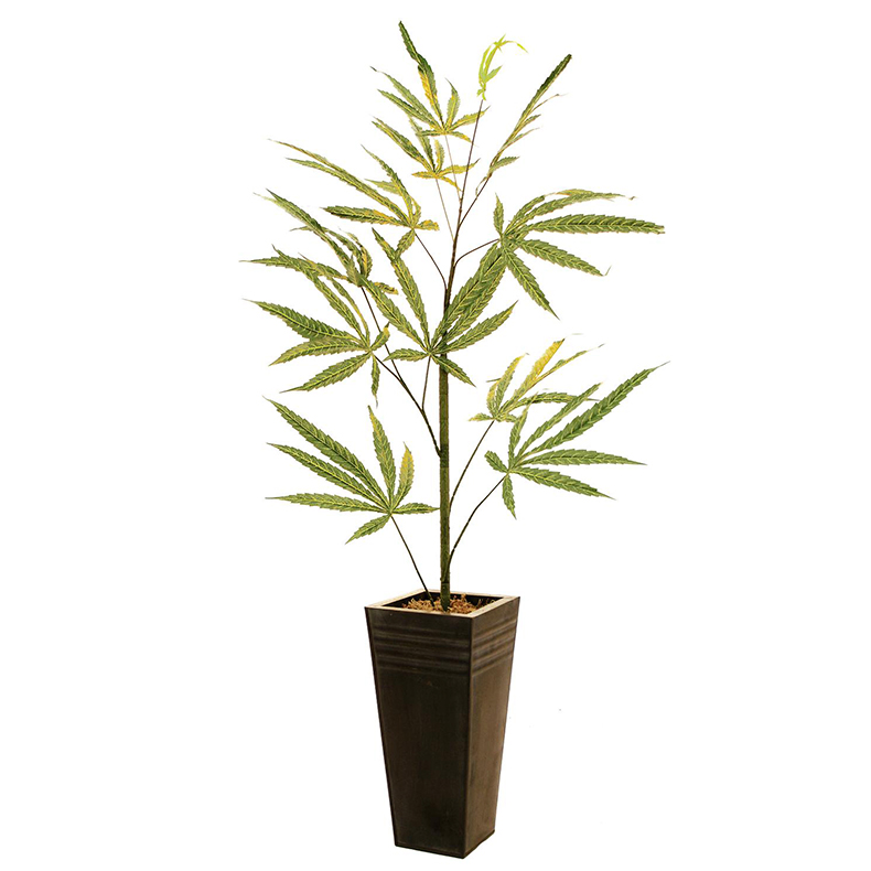 EUROPALMS 170cm Cannabis-taimi. Cannabis plant (textile). Legal decoration plant