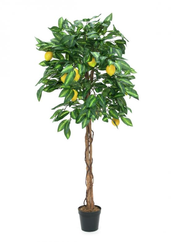 EUROPALMS 180cm Sitruunapuu hedelmillä luonnollinen Lemon Tree Lemon Tree - perfect for the food area