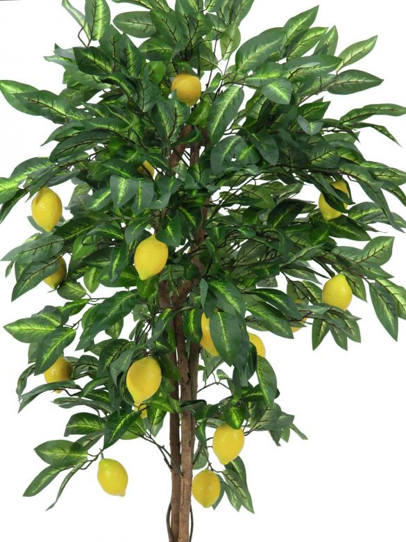EUROPALMS 240cm Sitruunapuu hedelmillä Aivan täydellin ruokailutilan dekoon.