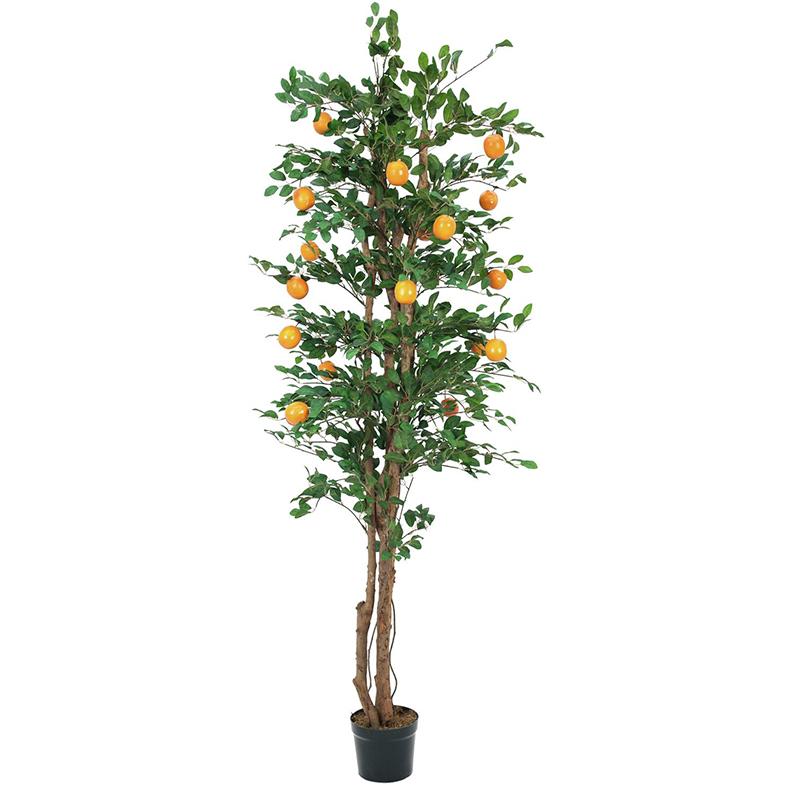 EUROPALMS 240cm Appelsiinipuu hedelmill�, discoland.fi