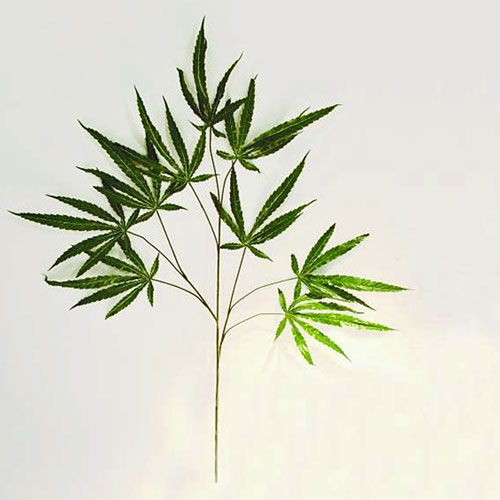 EUROPALMS 12kpl 100cm Cannabis-oksa. Cannabis spray (textile). Legal decoration plant