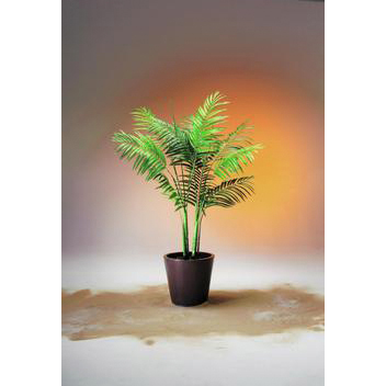 EUROPALMS 180cm Kultapalmutaimi. Areca Palm. Young palm plant very natural