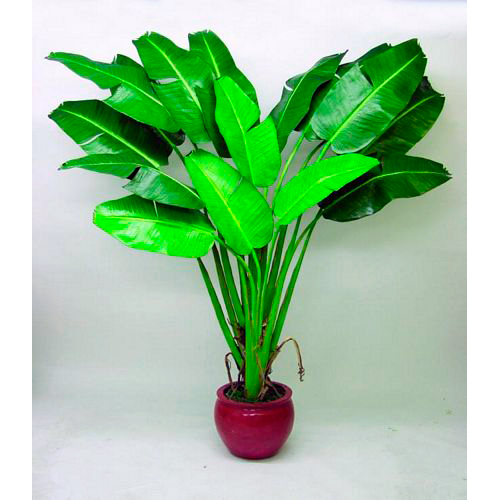 EUROPALMS 200cm Banaanipuutaimi. Banana Tree plantation. Voluminous banana plant, ideal for large area decorations