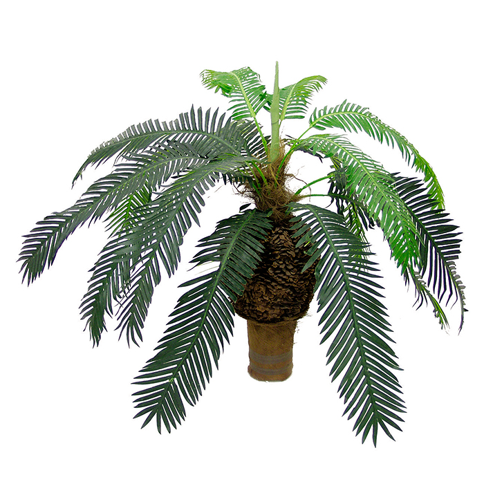 EUROPALMS 60cm Käpypalmu. Natural appearing Cycas palm covered with palm fiber material