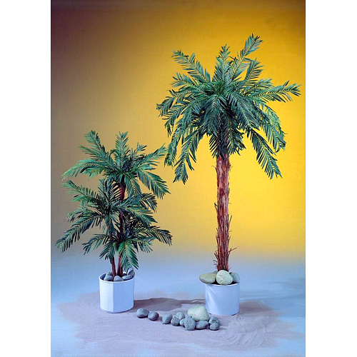 EUROPALMS 210cm Käpypalmu. Cycas Palm. Natural appearing Cycus palm, for the highest expectations