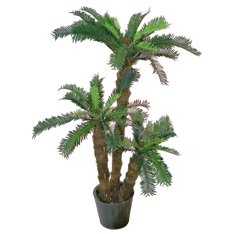 EUROPALMS 150cm Käpypalmu Trio. Cycas Palm Trio. Natural appearing Cycus palm, for the highest expectations