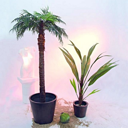 DECO 190cm Phoenix Palm tree real trunk,, discoland.fi