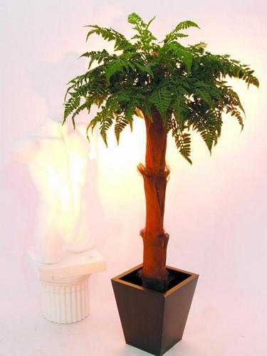EUROPALMS 170cm Fern Palm (loppu), discoland.fi