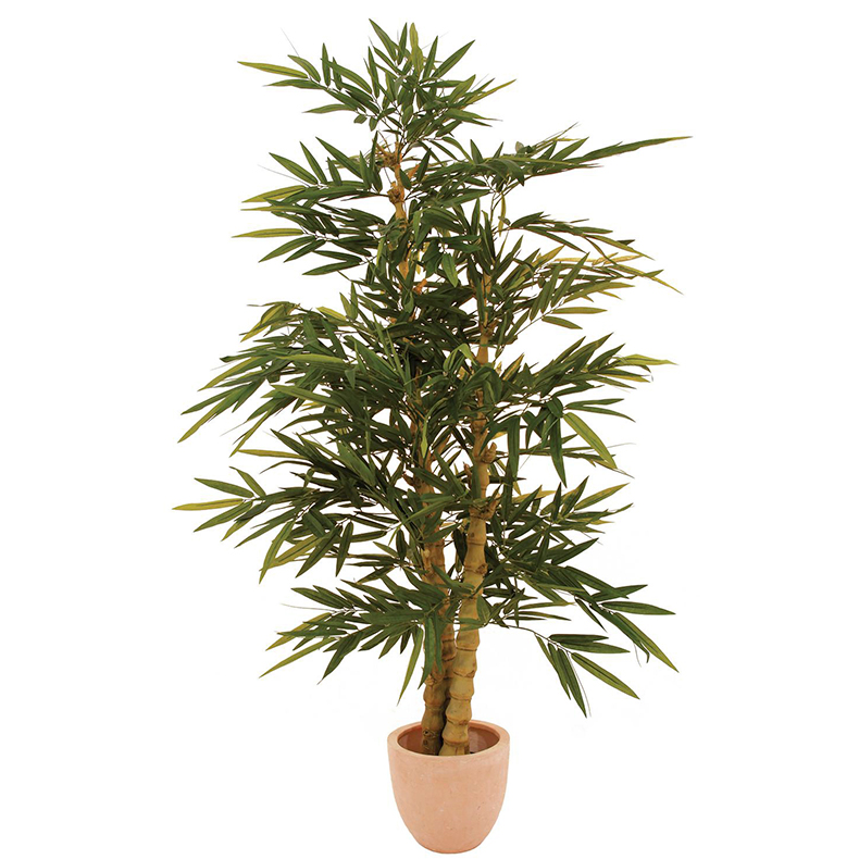 EUROPALMS 150cm Bambupuu paksuilla ns. helmirungoilla. Bamboo tree with pearl trunk. Classy bamboo tree for superior decorations