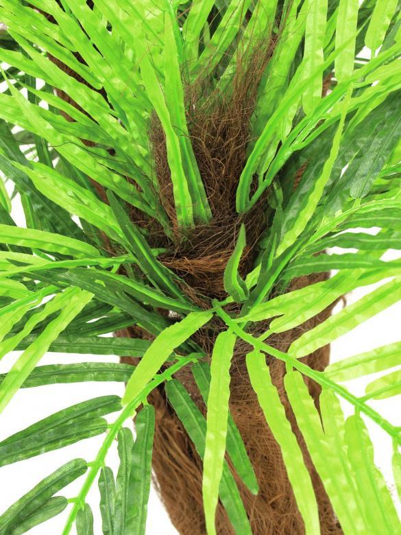 EUROPALMS 120cm Arekapalmu kookosparkkikuiturungolla, aitoa Arekapalmua eli Petelpalmua eli Pähkinäbetelpalmu kasvatetaan yleisesti Tyynenmeren trooppisilla saarilla, Aasiassa ja osissa Itä-Afrikkaa. Se on keskikokoinen puu, joka kasvaa 20 metriä korkeaksi. Rungosta tulee 20–30 senttimetriä paksu ja lehdet ovat 2–3 metriä pitkiä. Palmu tuottaa hedelmän, eli betelpähkinän, jota käytetään varsinkin Intiassa, Malesiassa ja Taiwanissa.
