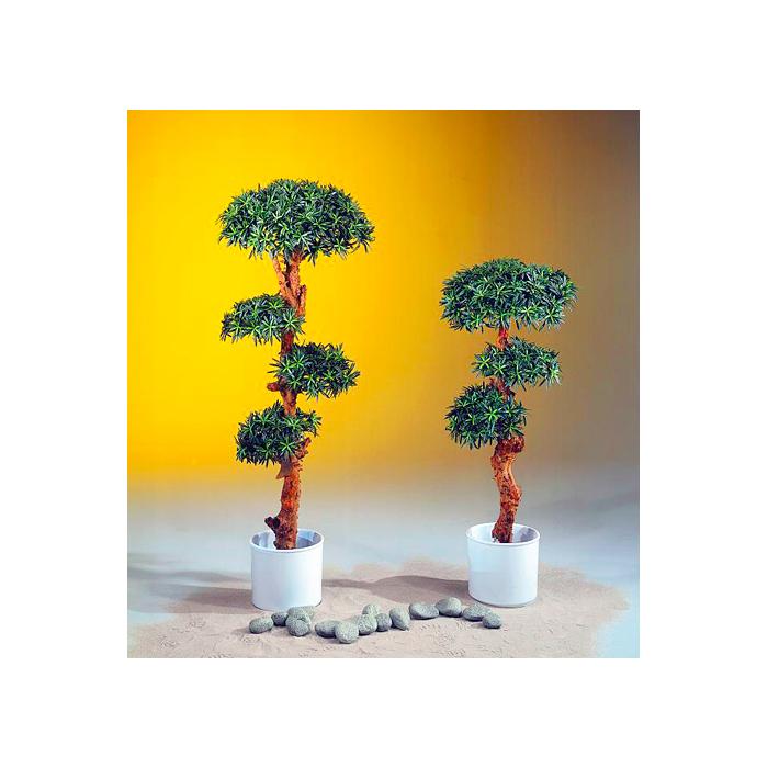 EUROPALMS 120cm Bonsaipuu todella upea 4800 lehdellä, premium laatua, aito ruko ja juurimuhkula, aito bonsai eli ruukkupuu tarkoittaa puuta, joka on kasvatettu ruukussa niin, että se alkaa muistuttaa lajitovereitaan pienoiskoossa. Sana bonsai on japania ja merkitsee ruukkuistutusta. On olemassa erityisiä puulajikkeita, jotka kasvavat puiden näköisiksi pienoispuiksi, mutta ne eivät ole oikeita bonsaipuita. Mikään puulaji ei automaattisesti kasva bonsaiksi, mutta teoriassa, mistä tahansa puusta voidaan kasvattaa bonsai – jotkin lajit vain soveltuvat bonsaitaiteeseen muita paremmin. Bonsaipuu tarkoittaa nimenomaan kasvia, joka on kasvatettu ruukussa ja joka huolellisella hoidolla alkaa muistuttaa oikeata, täysikokoista puuta. Bonsaipuita muotoillaan leikkelemällä niiden oksia ja juuria. Bonsaitaidetta harrastetaan edelleen myös Kiinassa, missä siitä käytetään nimitystä pénj?ng. Pénj?ng ei kuitenkaan ole aivan sama asia kuin bonsai, vaan siinä puita kasvatetaan puutarhoissa ja ne ovat suurempia kuin bonsait. Kuitenkin länsimaisessa kulttuurissa käsite bonsai käsittää japanilaisen bonsain, kiinalaisen pénj?ngin sekä korealaisen bunjaen.