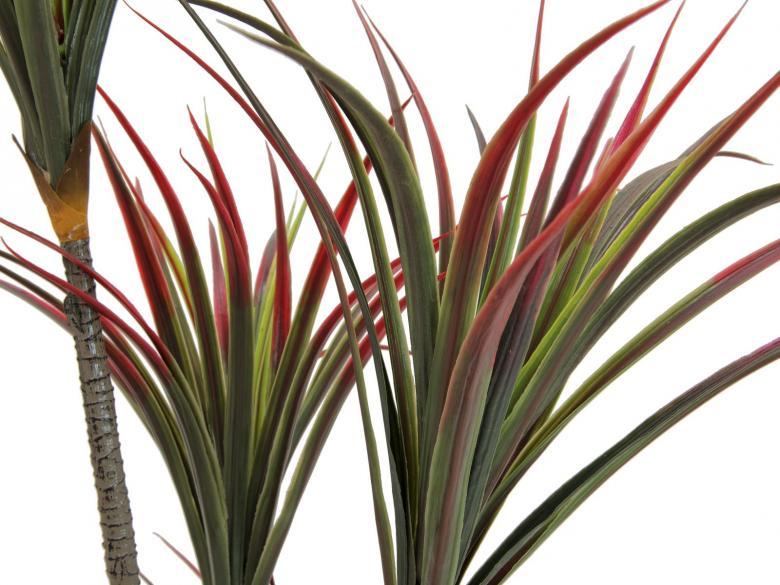 EUROPALMS 150cm Jukkapalmu nelirunkoinen, aidot rungot. Sopii melkein kaikkeen sisustukseen. Yucca palm.