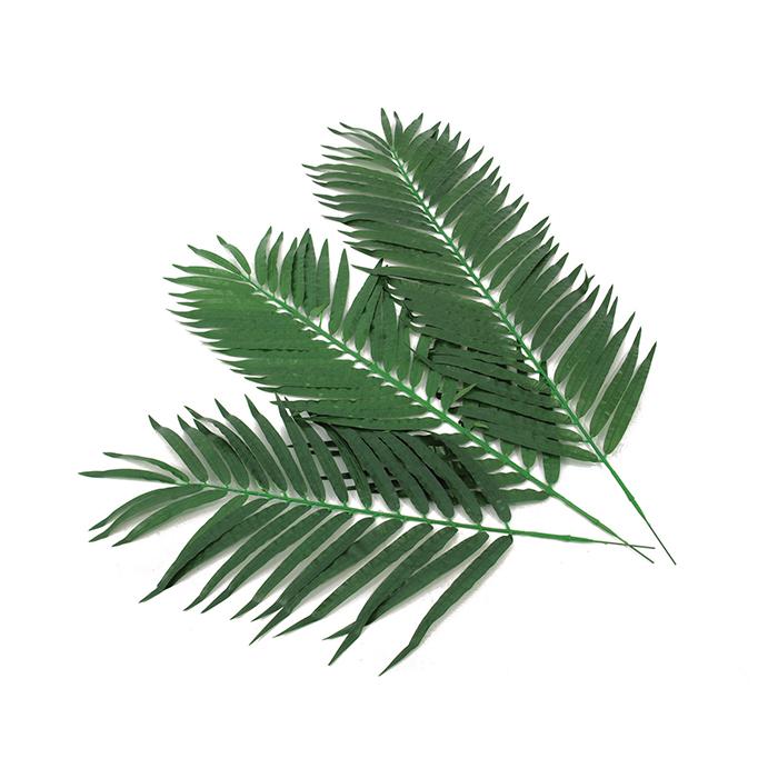 EUROPALMS 110cm 12kpl Kookospalmun lehvää koristeluun ja sisustukseen. Kookospalmu tunnetaan hedelmästään kookospähkinästä, se kasvaa jopa 40 metrin pituiseksi. Kookospalmun runko on haaraton, ja lehdet lähtevät tähtimäisesti yhdestä pisteestä. Palmu on kotoisin Kaakkois-Aasian rannikoilta Malesia, Indonesia, Filippiinit ja Melanesia. Uskotaan että sen luonnonmuodot ovat levinneet merivirtojen mukana jo esihistoriallisena aikana. Nykyisin sitä viljellään laajasti tropiikissa ja subtropiikissa. Kookospalmu on mielenkiintoinen ja tavallisuudesta poikkeava katseenvangitsija joko yksittäiskasvina tai ryhmänä.