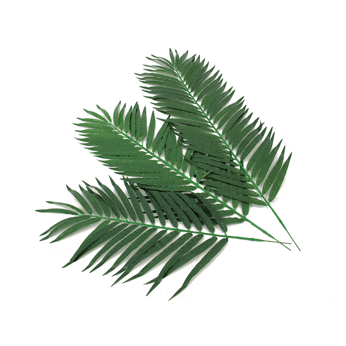 EUROPALMS 130cm 12kpl Kookospalmun lehvää koristeluun ja sisustukseen. Kookospalmu tunnetaan hedelmästään kookospähkinästä, se kasvaa jopa 40 metrin pituiseksi. Kookospalmun runko on haaraton, ja lehdet lähtevät tähtimäisesti yhdestä pisteestä. Palmu on kotoisin Kaakkois-Aasian rannikoilta Malesia, Indonesia, Filippiinit ja Melanesia. Uskotaan että sen luonnonmuodot ovat levinneet merivirtojen mukana jo esihistoriallisena aikana. Nykyisin sitä viljellään laajasti tropiikissa ja subtropiikissa. Kookospalmu on mielenkiintoinen ja tavallisuudesta poikkeava katseenvangitsija joko yksittäiskasvina tai ryhmänä.