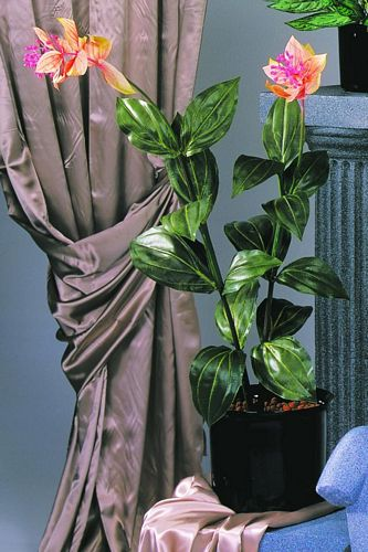 EUROPALMS 100cm Medinilla plant with 2 branches 2 flowers 16 leaves