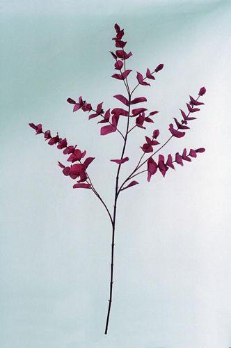 DECO Eucalyptus Spray x 3 red, discoland.fi