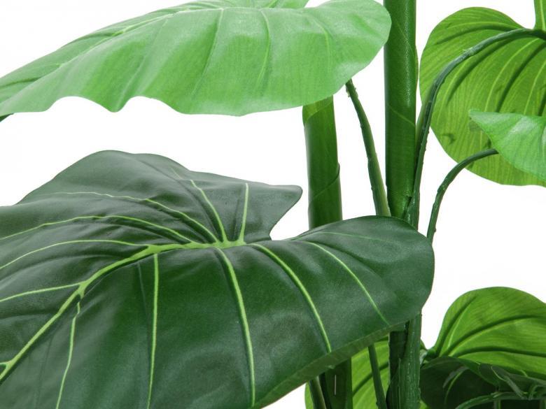 EUROPALMS 90cm Kirjolehtitaimi kuuluu vehkakasvisukuun, jonka lajeja käytetään huonekasveina. Ne ovat kotoisin trooppisesta Etelä-Amerikasta.