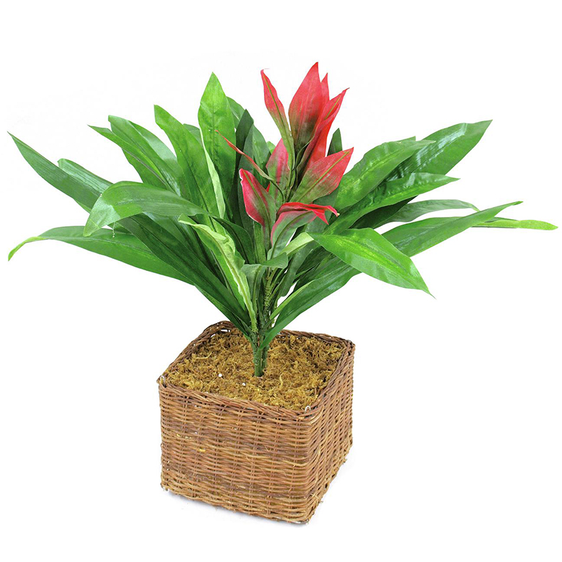 EUROPALMS 48cm Isotimanttiananas. Guzmania with red flower. Classy leaf shape with striking red blossom
