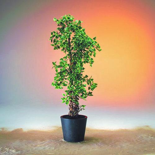 DECO 180cm Coleus Topiary mediterranean , discoland.fi