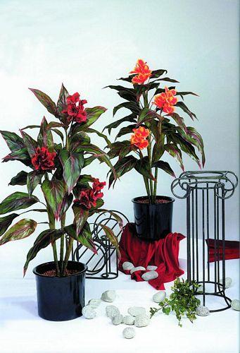 EUROPALMS 150cm Canna red/black flowers