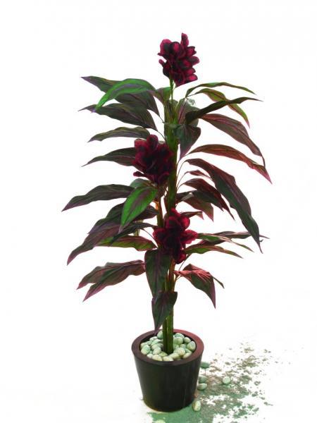 EUROPALMS 150cm Canna red/black flowers , discoland.fi