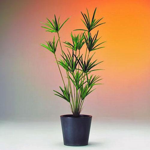 DECO Cyperusgrass x14 stems 150cm, discoland.fi