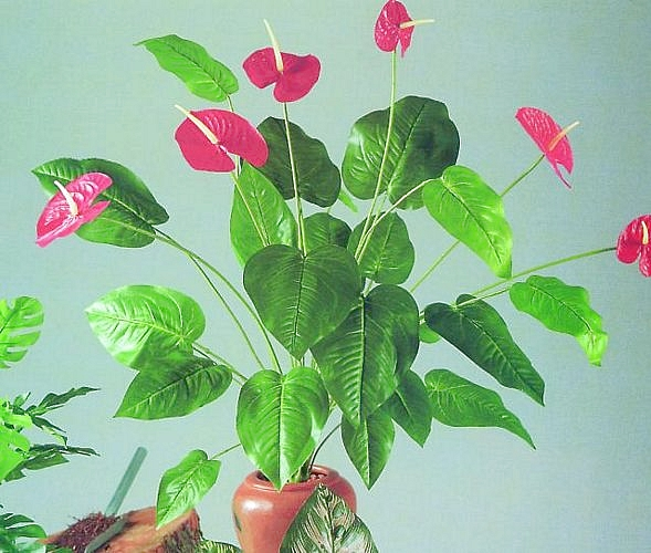 DECO POISTUNUT TUOTE..... 90cm Anthurium 6 flowers 26 leaves