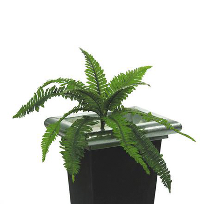 EUROPALMS Loppu!!50cm Miekkasaniainen 12 lehvää, halkaisija avattuna 50cm. Boston fern, 12 leaves. Classy fern with young sprouts