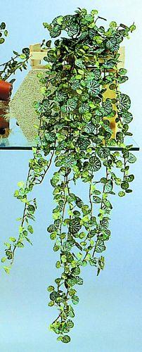 DECO Pellargonium tendril 3-fold, discoland.fi