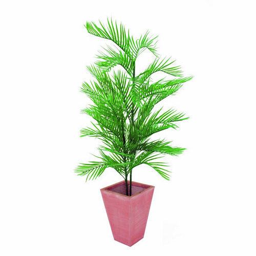 EUROPALMS 90cm Kentia Palm Tree 2 stems, discoland.fi