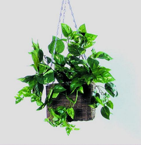 EUROPALMS 100cm Cubic hanging ivy bush S, discoland.fi