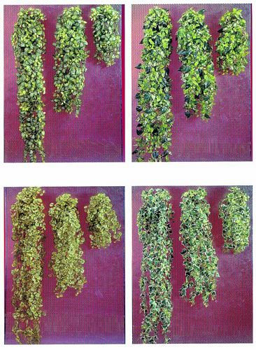 EUROPALMS 140cm Hanging cubic Philodendron bush Set