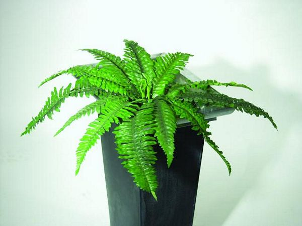 EUROPALMS 60cm Cubic hanging fern 18 leaves Set