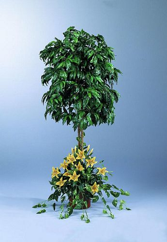 EUROPALMS 180cm Mango tree-arrangement S, discoland.fi