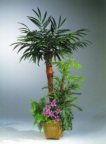 EUROPALMS 210cm Phoenixpalm arrangement , discoland.fi