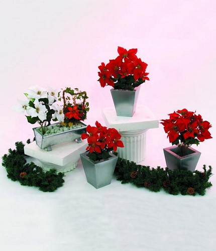 DECO 33cm Poinsettia 6 flowers red potted